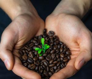 Photo de mains avec grain de café à l'intérieur